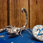 торт скорпион